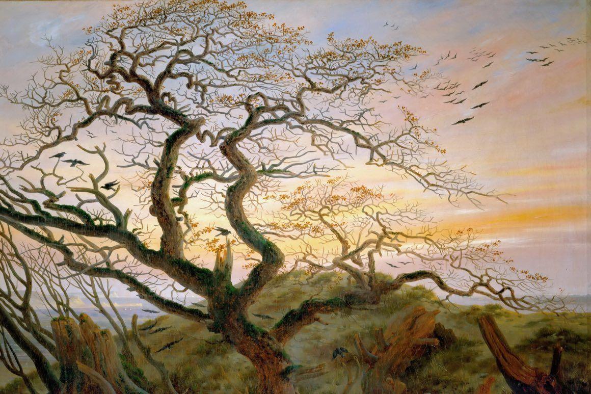 Obrazy drzew