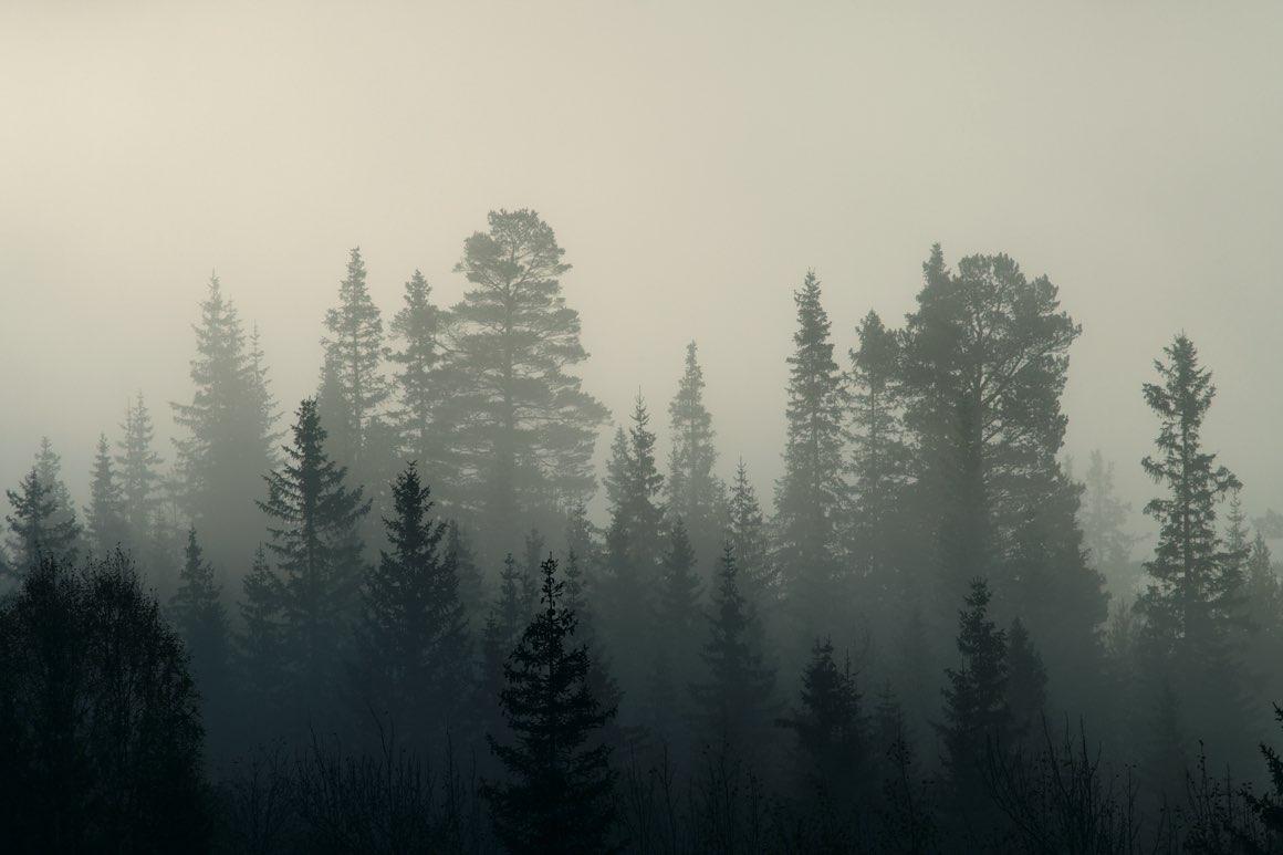 """O książce """"A lasy wiecznie śpiewają"""" Trygve Gulbranssena mogę powiedzieć tylko jedno – szczerze polecam"""