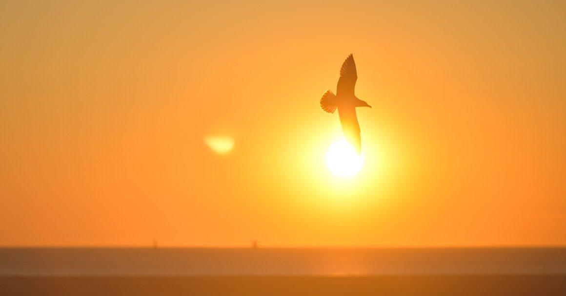 ptak na tle wschodzącego słońca